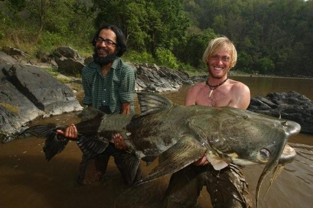 Giant devil catfish the goonch catfish goonch catfish for Goliath tiger fish for sale