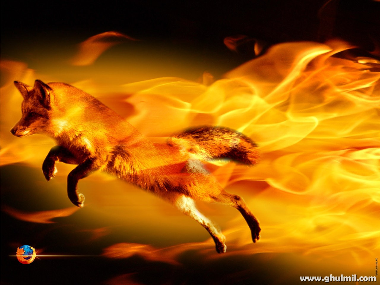 http://4.bp.blogspot.com/-3xGxs97o5vo/TaoJlPrxgxI/AAAAAAAAJvo/g7g2WnMcQD8/s1600/amazing-3d-fire-fox-hd-hi-res-wallpaper-for-computers.jpg