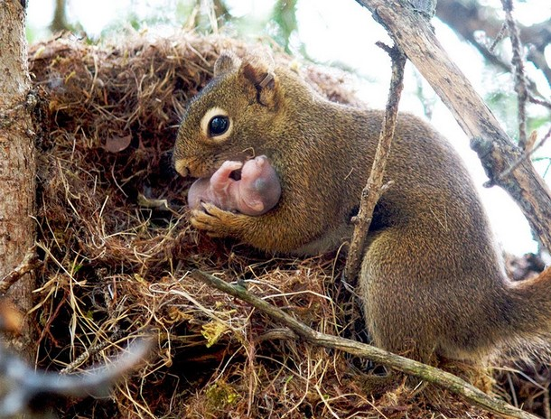 25 Amazing Pictures Of Wild Animals And Their Babies