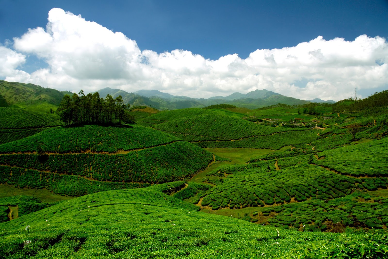 Munnar The Most Sought After Destination In Kerala Kerala Tourist Places Beautiful Places To