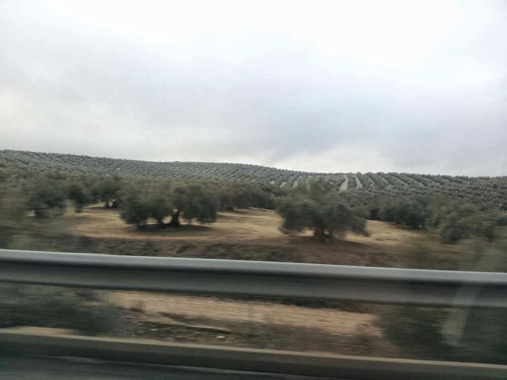 Rows and rows of olive trees... 4 hours of driving :: All Pretty Things