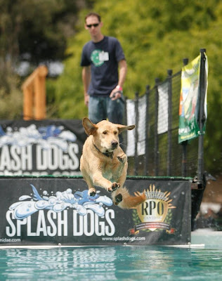 Dog splash at America's Family Pet Expo