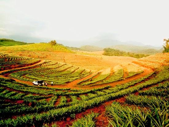 Aralam Farming Corporation Kerala Manager Recruitment