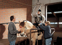 Hoist for Disabled Horse Riding Image