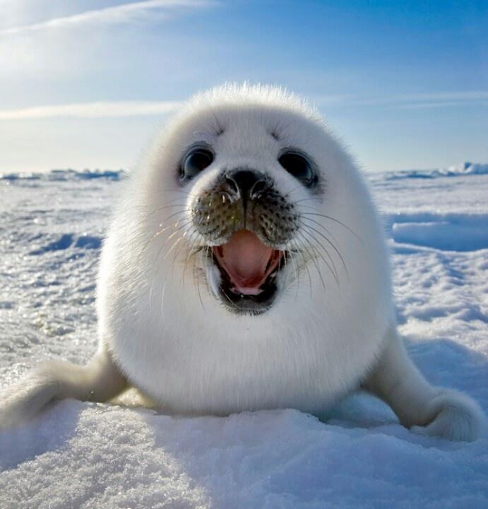 adopta una foca