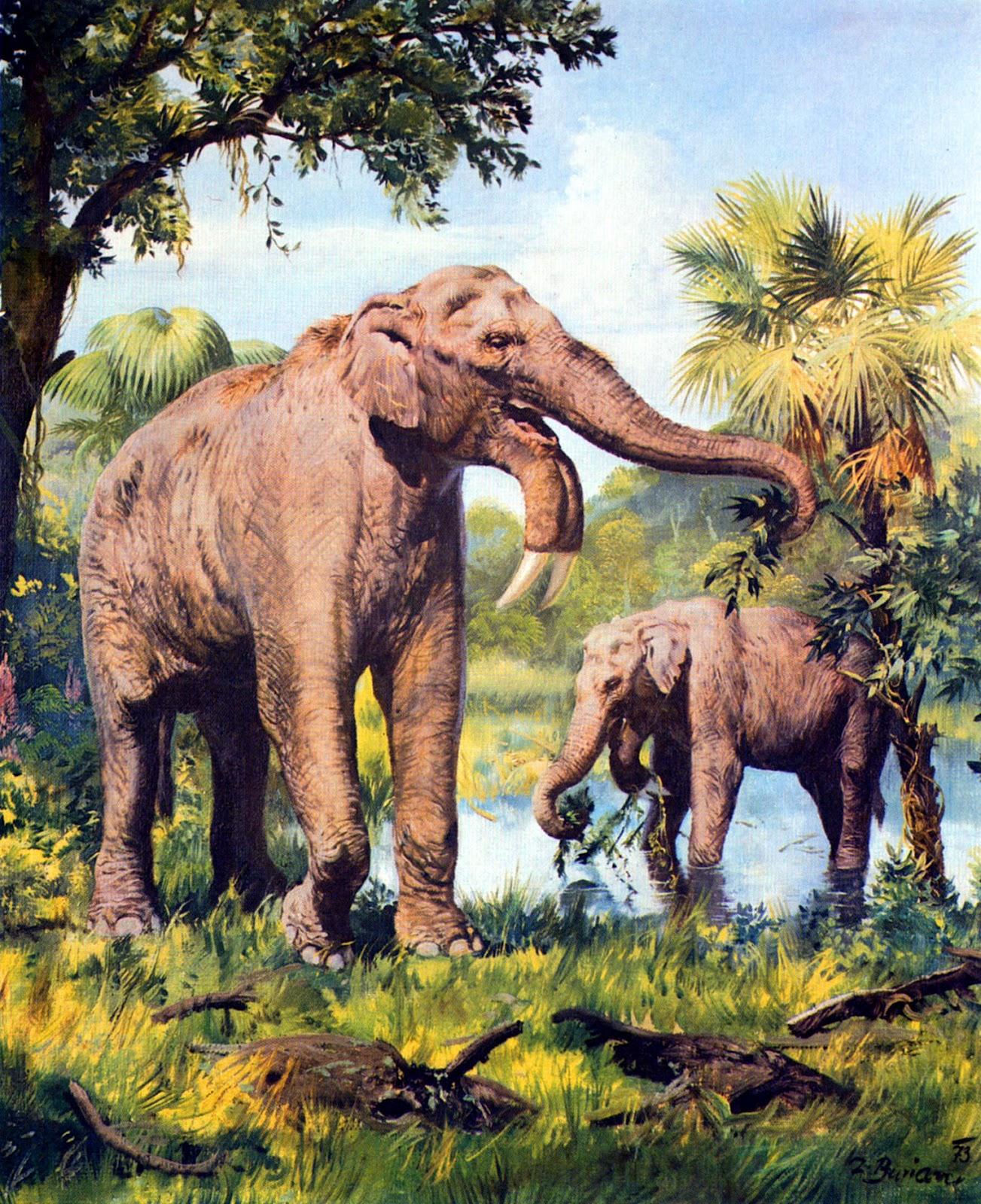 An Early Species Of Elephant By Burian 1973 Zdenek