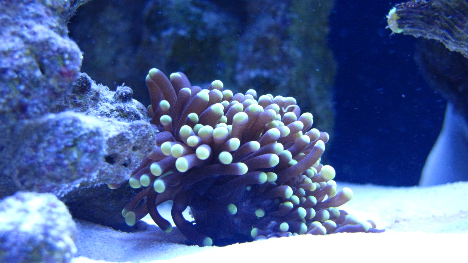acquario marino fai da te: fai da te acquario di barriera ... - Mobili Per Acquario Marino
