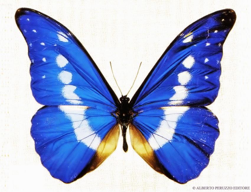 Ottobre 2014 - Immagini di farfalle a colori ...