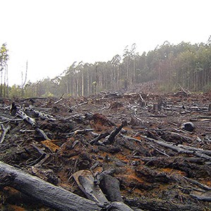 Carbon conundrum: One way to decrease the amount of carbon in the atmosphere would be to reverse the kind of deforestation shown here in Victoria, Australia.(Credit: Flickr/crustmania) Click to enlarge.