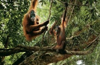 Sanctuary Sarawak & Sabah
