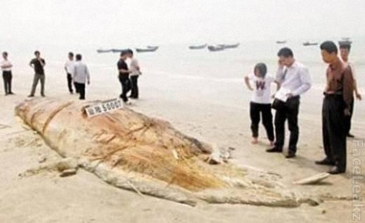 Monster Laut Sepanjang 17 Meter Ditemukan Terdampar di Pantai Cina -- foto -- faceleakz