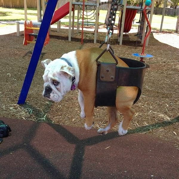 Cute dogs - part 6 (50 pics), dog on swing