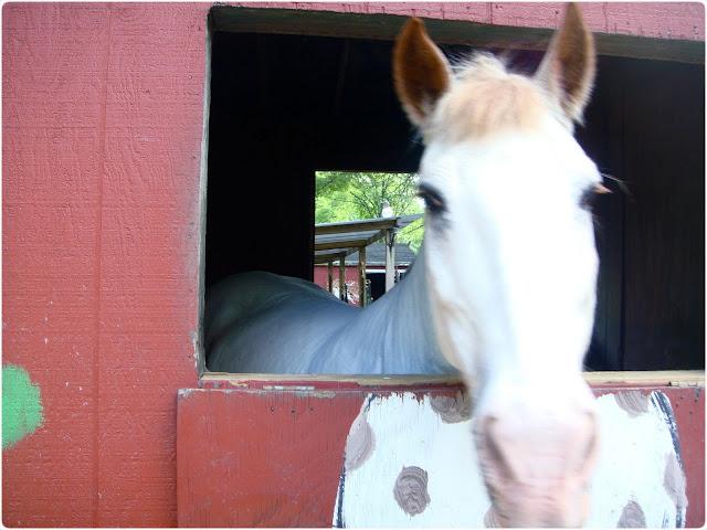 Scary sleepy horse - they've got huge teeth!