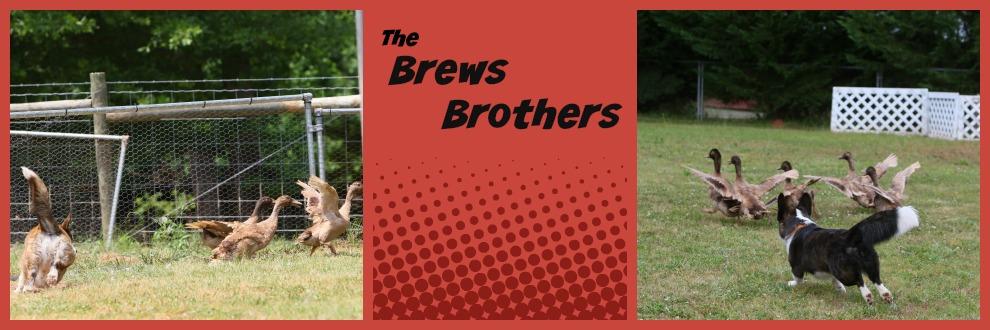 The Brews Brothers