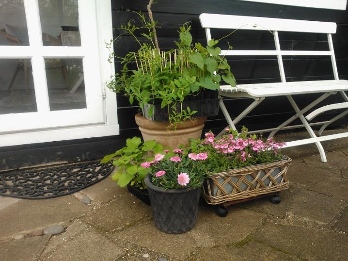 Nettes lille have: hvornår skal man udplante i krukker?