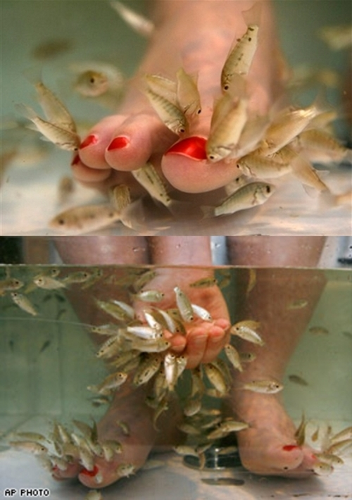 tambo nation fish pedicures omg