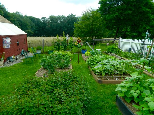 Pam's English Cottage Garden Kitchen Garden Update