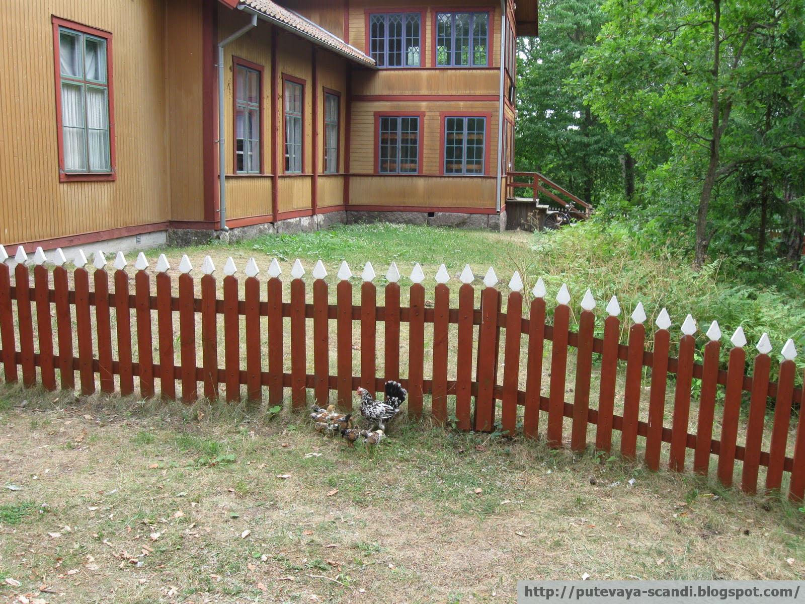 домашние птицы в Скансене