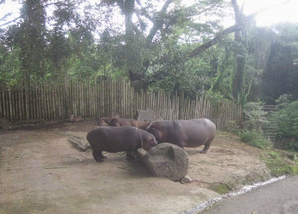 Serunya Bertamasya ke Taman Safari Indonesia