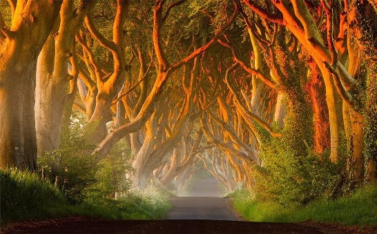 The Dark Hedges Game of Thrones Irlanda del Norte
