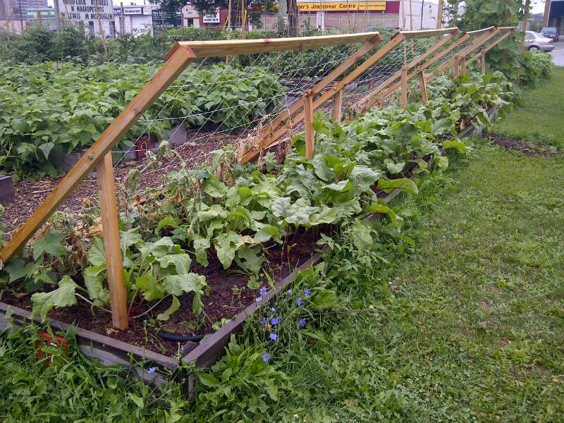... Garden Network: From FoodShare: Innovative Ideas for the School Garden