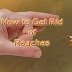How to Get Rid of Roaches with Effective Remedies