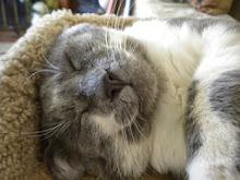 kitty pic o' the week