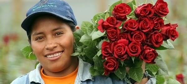 Ecuadori rózsák