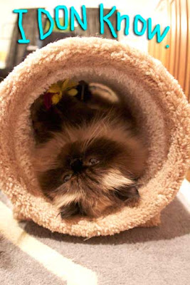cat-tunnel-03