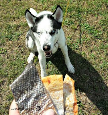 Surf & Turf Salmon Skin For Dogs