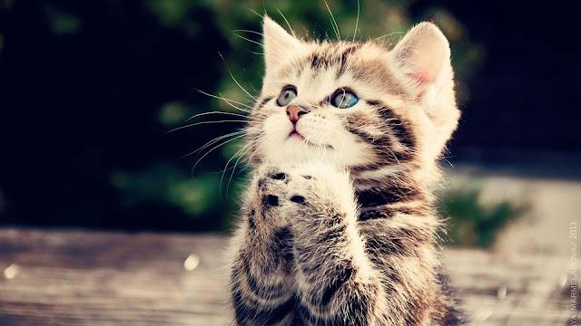 cat cute animal