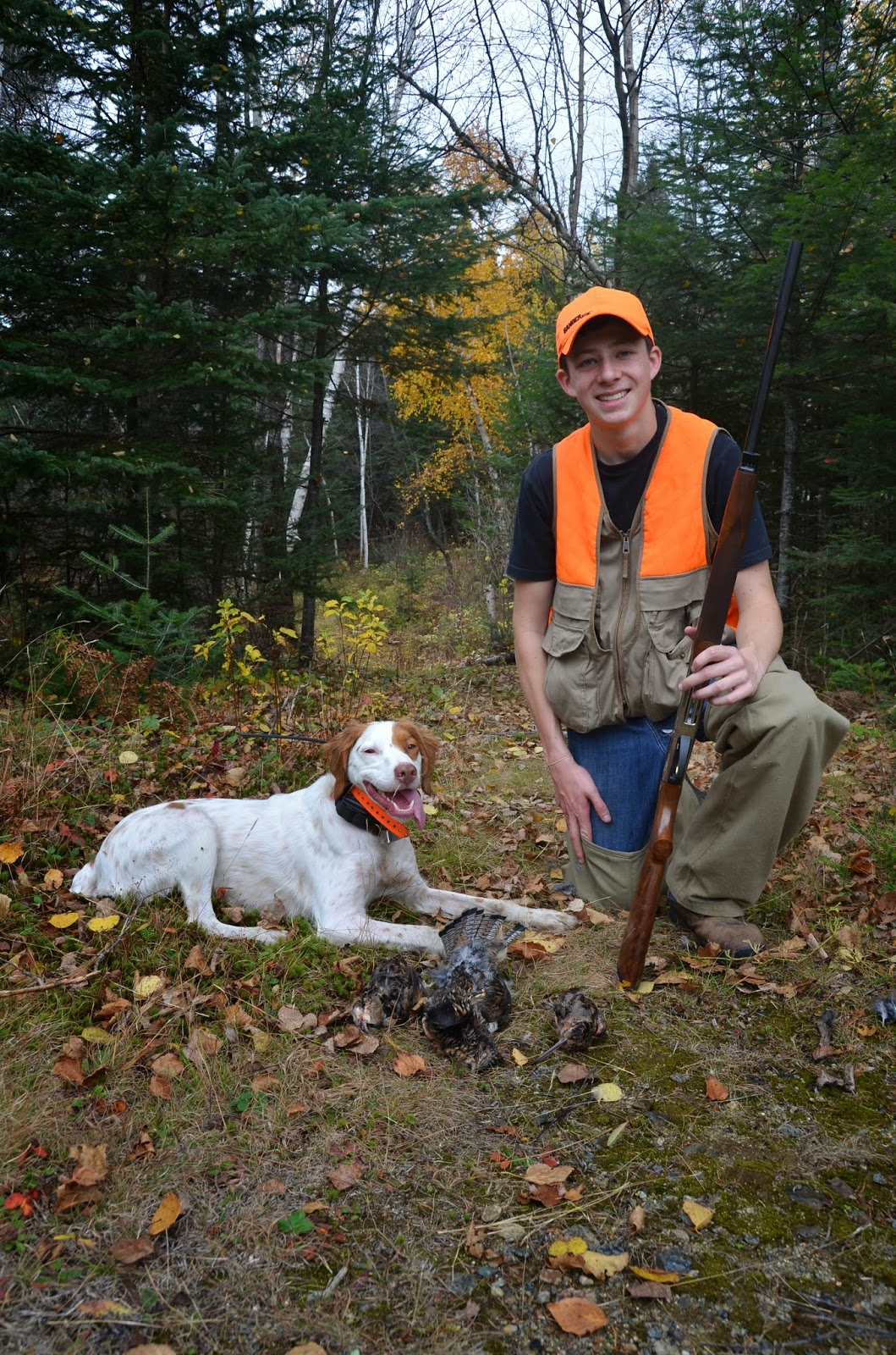 Maine Grouse Rangeley Lakes Region Brittany