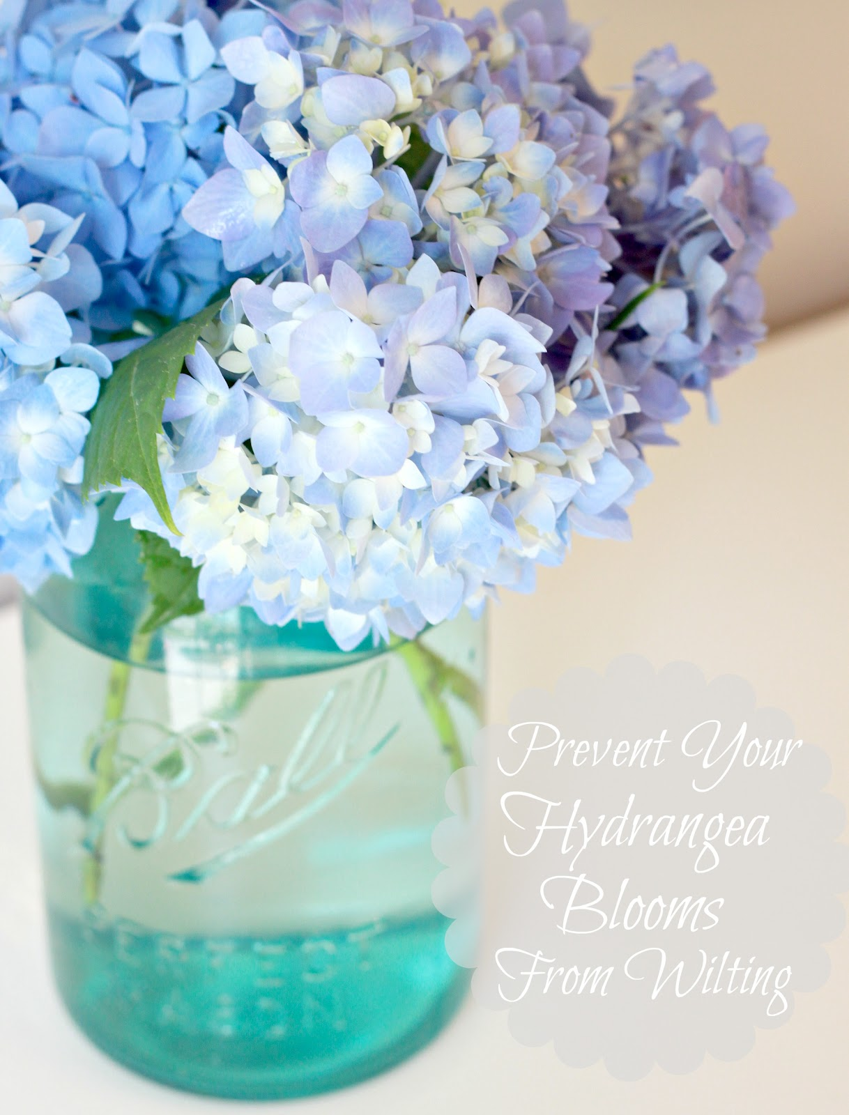 Tip to keeping cut hydrangeas looking fresh love of family home how to keep fresh cut hydrangeas from wilting izmirmasajfo