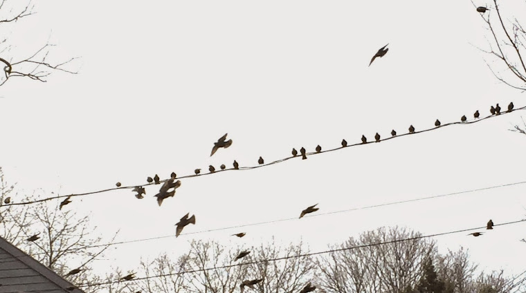 something about starlings