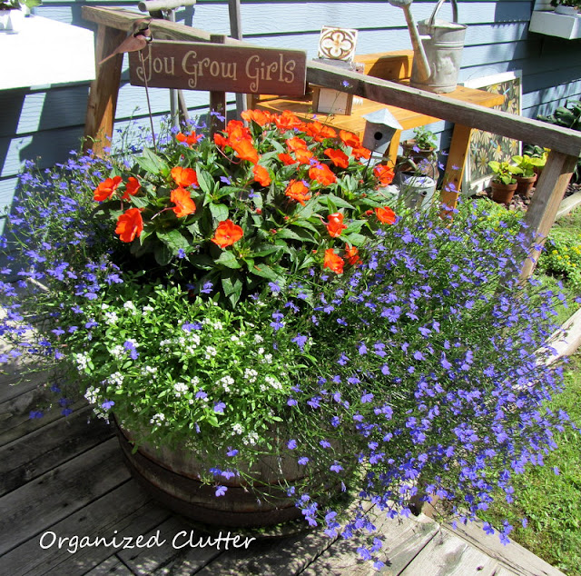 Sunpatiens, alyssum and lobelia in a wood barrel