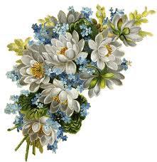 Estimar les flors, es estimar la vida