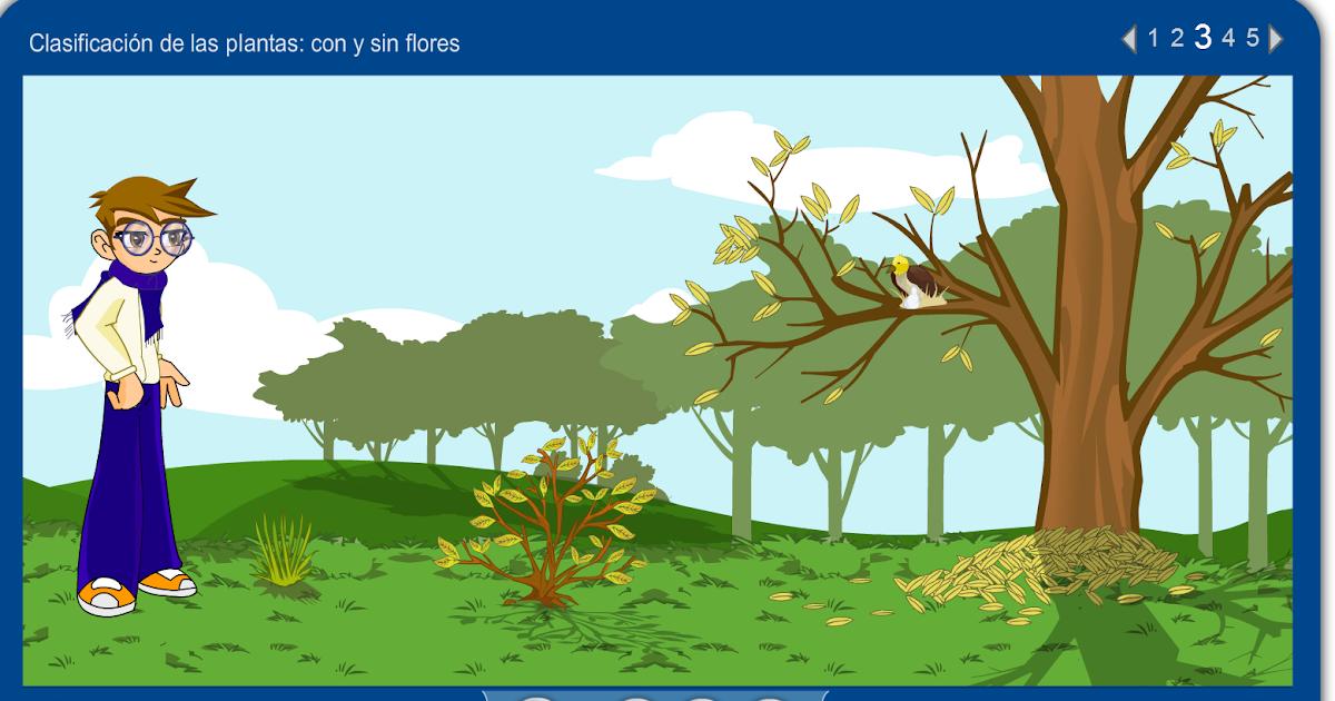 Aprender investigando completamos con tres bonitos juegos for Clasificacion de las plantas ornamentales