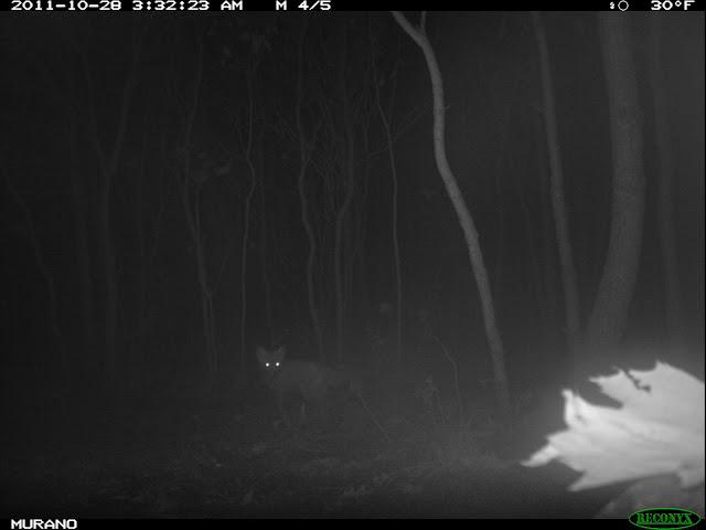 predator picture