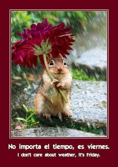 cipmunk under flower