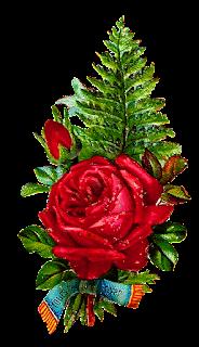 stock rose image digital