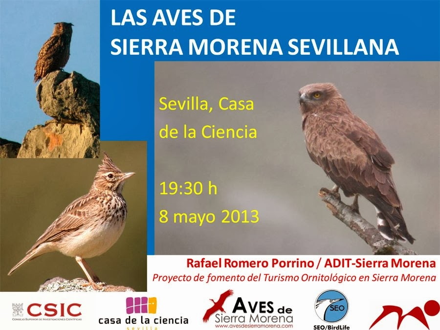 """Cartel """"Los martes de las Aves. Rafa Romero Porrino. SEO-Sevilla"""