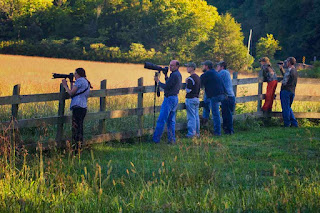 Elk Photographers & Watchers in Boxley Valley, Ponca, AR