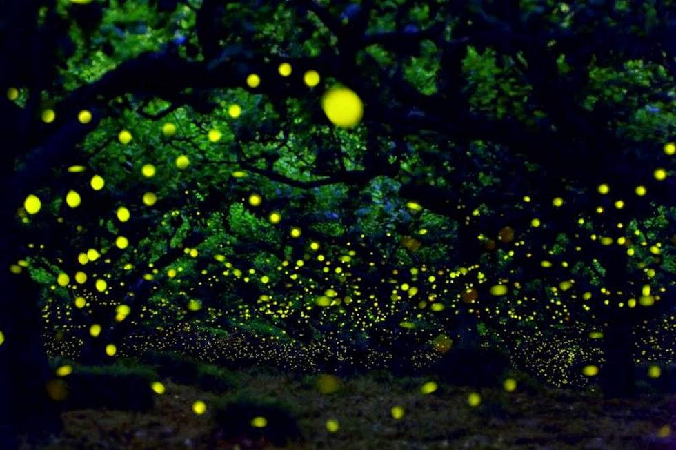 Парк светлячков в Малайзии. Фото