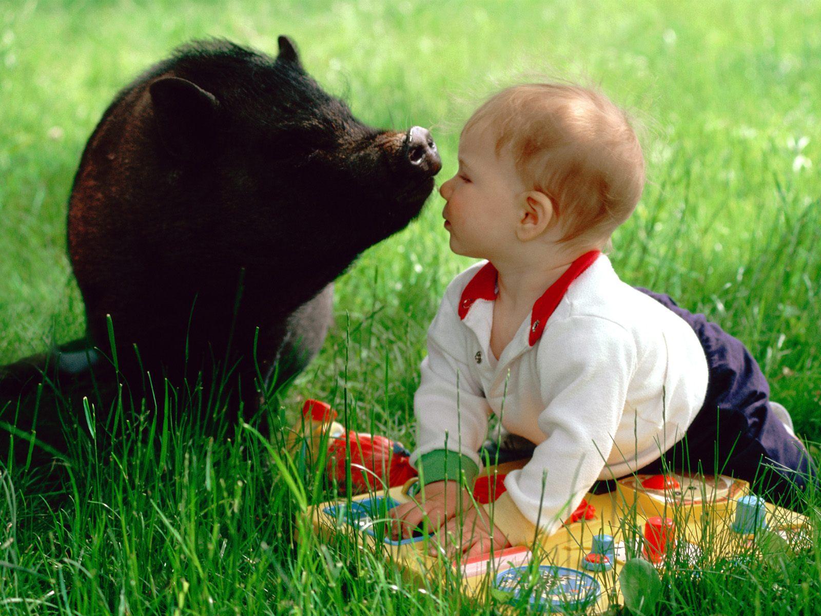 Compartiendo Fondos : animalitos tiernos fondos de pantalla