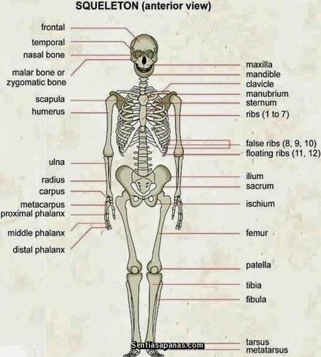 Manusia Memiliki 360 Sendi