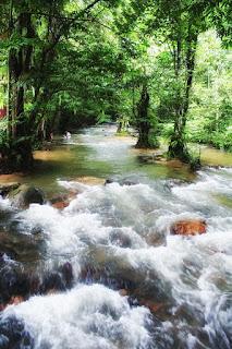 Hutan lipur sungai tua