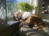 Mijn lieve hondje!