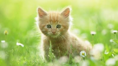 """""""Cute"""
