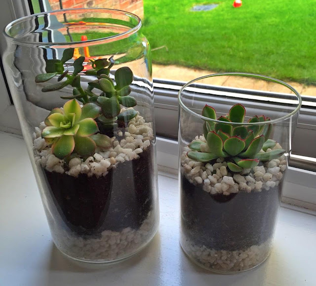 DIY easy and simple terrarium