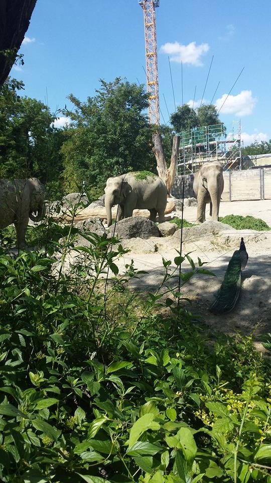 kultur und sehensw rdigkeiten tierpark hellabrunn der zoo m nchens. Black Bedroom Furniture Sets. Home Design Ideas